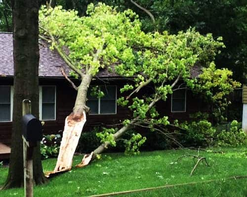 tree split after storm