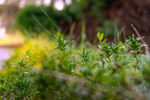 Garden herbs planted in repurposed rain gutters